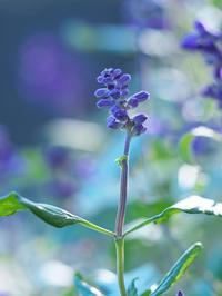 青と紫の境界 - 節操のない写真館