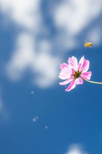 ハチが飛び去った後のキラキラ - Omoブログ