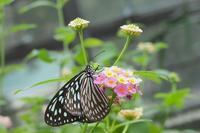 蝶の観察写真( ´艸`) - ことのは