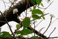 狂い咲き - 錦眼鏡