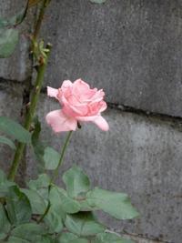 深まる秋の庭・・・ - 【出逢いの花々】