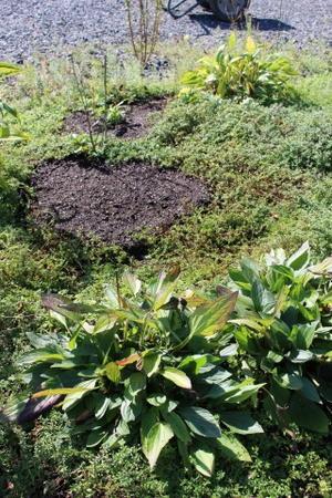 植え日和&どんぐりのベレー帽 - HOME SWEET HOME ペコリの庭 *