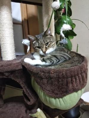 猫壺の季節 - ちゃたろうとゆきまま日記