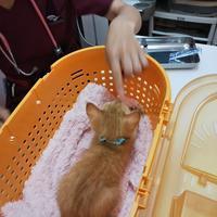 タマちー1回目ワクチン、きかんぼーズFF陰性♪ - ゆきももこの猫夢日記