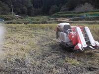 農夫にもどって稲刈り - ひろしの「どっこい田んぼのジャージーデー」