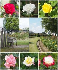 秋のバラ in RSKバラ園 - ひとりあそび