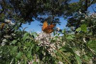 力強く吸蜜する蝶たち - TOM'S Photo