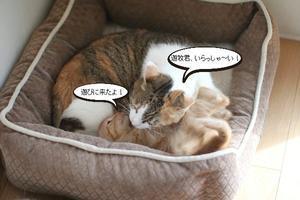 仔猫のお世話は順番に - 保護猫さんのご縁探し
