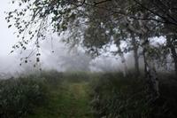 雨霧SNAP - Qualia
