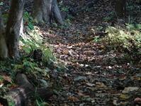落ち葉とゴジュウカラさん。 - ヒロムシ君のお散歩日記