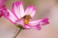 BEE! - cache-cache
