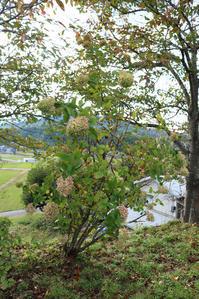 秋色ノリウツギと裏山から見える風景 - CROSSE 便り