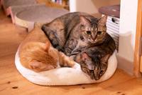 チャルさん争奪戦 - 猫と夕焼け