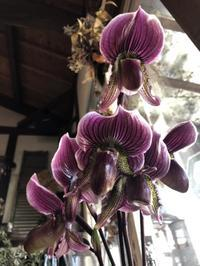 『映画の様な……。』 -  Flower and cafe 花空間 ivory (アイボリー)