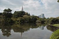 2018.10.18東京都新宿区新宿御苑 - Mountain  Rose2