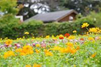 元気が出そうな秋の色(*^-^*)♪ - fukko-san*  blog