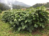 今日の農作業 - 蔵カフェ「飯島茶寮」