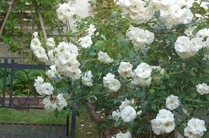 集英社「OurAge」連載コラム 10月  - la fleur ラ・フルール