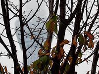 秋の枝 - 四十八茶百鼠(2)