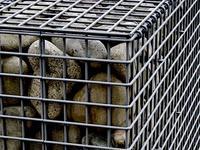 蛇籠(じゃかご) - 四十八茶百鼠(2)