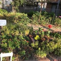 公園の花壇 - おうちやさい