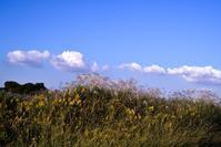 ぽっかり浮かんだ白い雲 - ナンちゃんの天然色写真&白黒写真