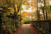 秋色 - 旧軽井沢より  つるや旅館からのお便り