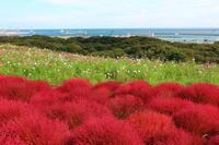 海の見える丘の風景~秋 - 気ままに☆ひ撮り旅