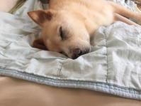 歯根膿瘍再発 - 老犬。犬生これから。