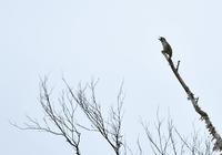 雨上がり - 可愛い野鳥たち 2
