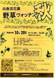 私は建築三昧に参加で出られませんが、10月20日向島百花園「野草ウオッチング」開催されます - みるはな写真くらぶ