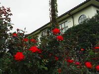 洋館の赤い薔薇 - 風の香に誘われて 風景のふぉと缶