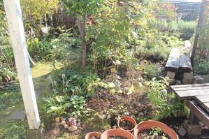秋の庭 - ほのぼのまめまめ