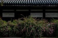 元興寺の萩と季節の花々 - 鏡花水月