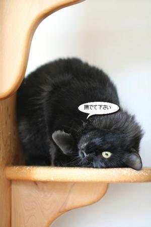 保護猫さんのご縁探し
