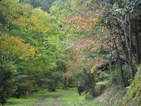 初秋 - 鹿深の森