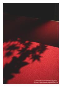 小さい秋見つけた - ♉ mototaurus photography