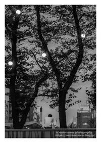 秋ひとり - ♉ mototaurus photography
