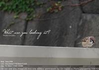久しぶりの切出御免は原寸の30%をsony α7RIII + SEL55F18Z 実写を実寸比較。雀撮るにゃ望遠レンズ不要の55mm一本勝負作例 - 東京女子フォトレッスンサロン『ラ・フォト自由が丘』-写真とフォントとデザインと現像と-