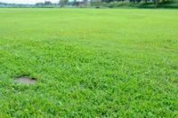 芝生です。 - 平凡な日々の中で