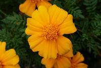 庭の花 - はりねずみの日記帳