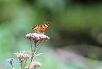 毛虫の代わりに青虫を食べるよ、寒くなって来たので虫がわいてきたよ、嬉しいです。誠 - 皇 昇