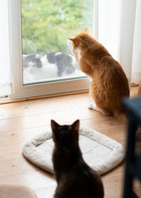 チャルの謎の行動 - 猫と夕焼け