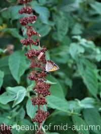秋の花蝶風月(+ロンドン土産) - serendipity blog