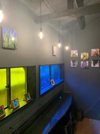 mick park 写真の世界 - COTTON STYLE CAFE 浦和の美容室コットンブログ