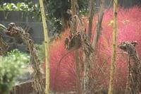 種取り鳥 - ひめたんママちゃんのブログ