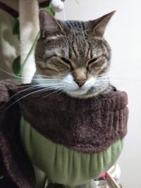 不安定な猫壺にそ〜っと進呈 - ちゃたろうとゆきまま日記