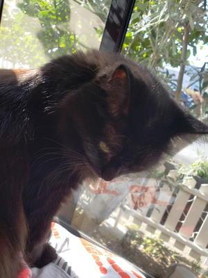 魔女&黒猫+愉快な仲間たちの  気まぐれブログ