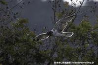 ズグロ飛ぶ - 気ままに野鳥観察