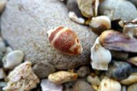 白浜に行ってきました6 - Beachcomber's Logbook